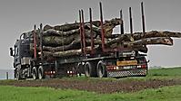 Holzlieferung - 01